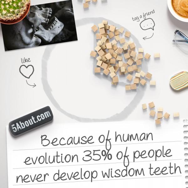 Wisdom Teeth